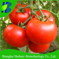 2017 Hybrid tomato seeds from china