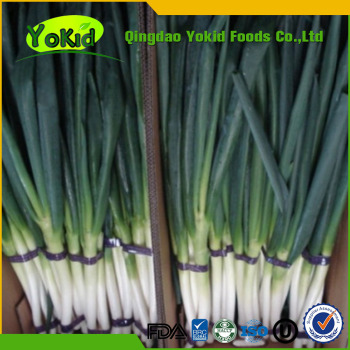 low price for fresh green Chinese onion manufacturer BRC