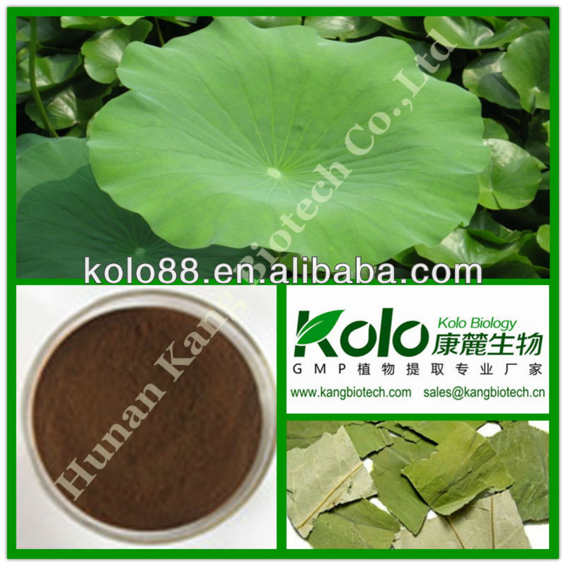 treating fatty liver plant flavonoids lotus leaf extract