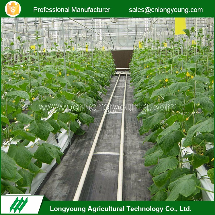 Fashion professional anti-rust polycarbonate industrial garden greenhouse