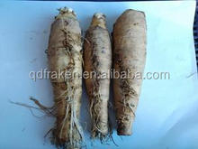 100% Natural Inulin 90% Cichorium Intybus L Root Extract