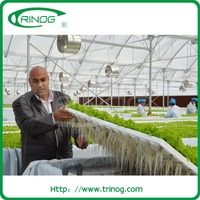Advanced Nft Hydroponics Growing System For