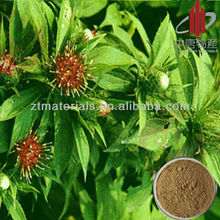 Natural Raw Material Powder Langehead Atractylodes Rhizome Extract