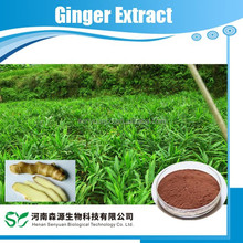 GMP HACCP Orgnic Ginger Root Extract
