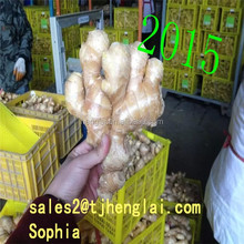 buyer of dry ginger for sale