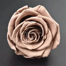 Natural Fresh Cut Flowers Coffee Color Roses Preserved Roses For Lady's Gift