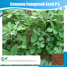 High Quality Common Fenugreek seed P.E. with CAS. 781658-23-9