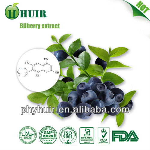 Bilberry Extract powder 15%-25%