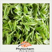 Solvent Extraction Extraction Type and Powder Form green tea extract for slim