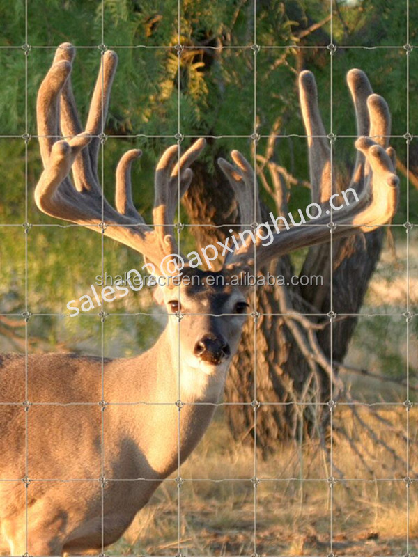 Hot-dipped Galvanized Steel Deer Fence