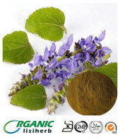high quality Forskolin 10% 20% powder / Coleus Forskohlii extract