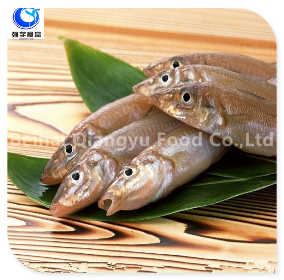 Frozen Fish Sardine Whole Round