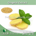 100% natural instant ginger powder ,ginger extract powder water soluble