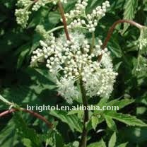 Chinese Natural Angelica Extract