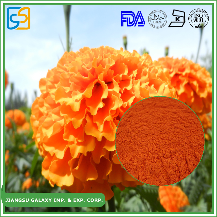 Natural protect eyes p.e marigold flower extract powder lutein