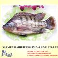 Tilapia fish wholesale 200-300g for walvis bay