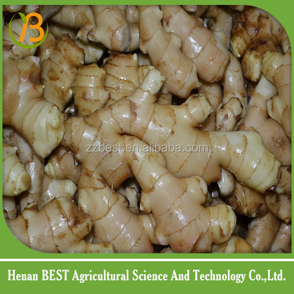 Buy good farmer fresh young ginger product