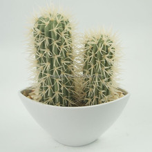 Real touch decorative cactus plants for home /office/living room