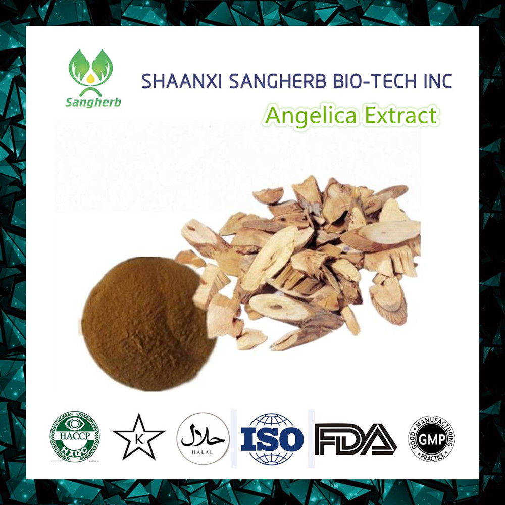 100% Natural herb extract angelica extract powder dong quai extract 1% ligustilide