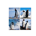 Penguin Picture Canvas Prints Wild Animal Canvas Printing Wall Decor for Home and Office 4-Panel