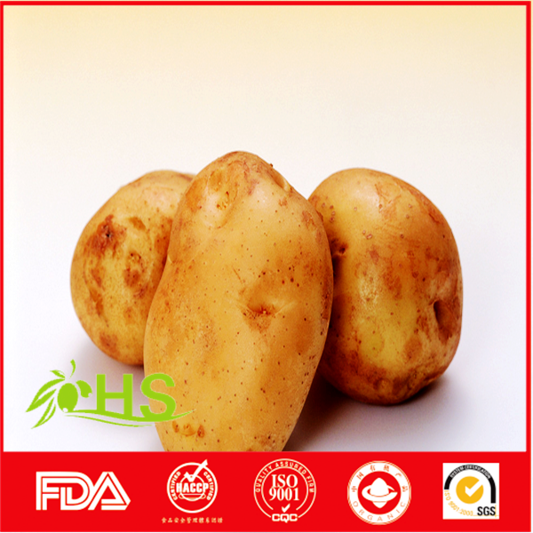 Fresh russet potato wholesale price