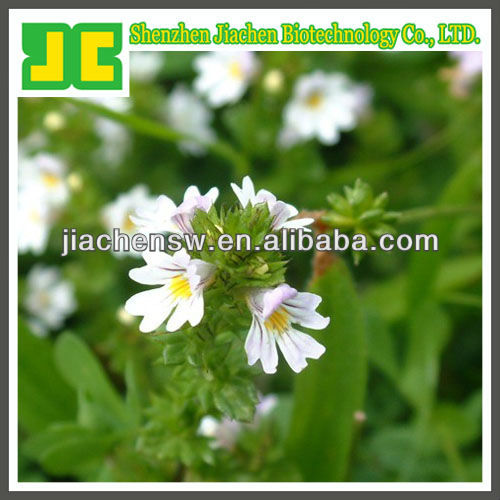 natural Eyebright Extract powder 4:1,10:1