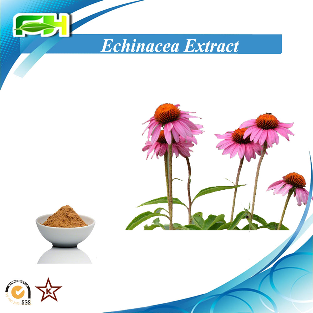 100% Natural Echinacea herb P.E. Echinacea Extract