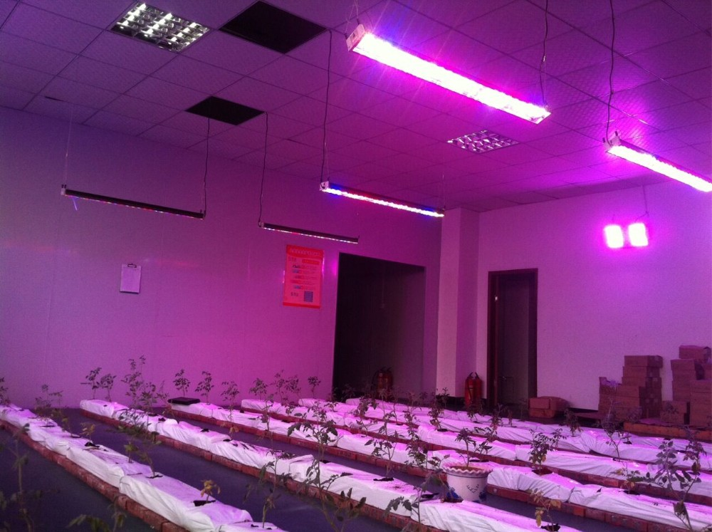 Greenhouse used lettuce led grow light housing