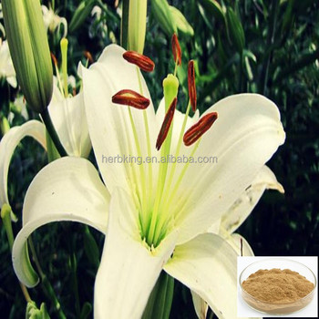 Lily bulb extract Factory supply