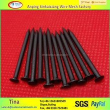 High strengh harden black carbon steel concrete nails( factory)