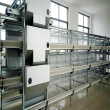 New customization automatic uae super large coop outdoor chicken cage farm poultry equipment for sale
