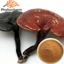Factory Sell 10%-50% Polysaccharides Raw Whole Reishi Mushroom Best Price