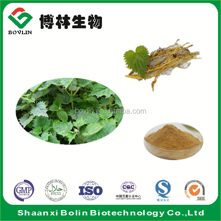 100% Natural Nettle Extract Nettle Root Extract Powder Nettle Root P.E.