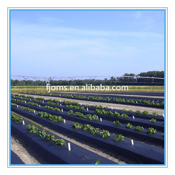 Biodegradable plastic mulch film for tomato growing