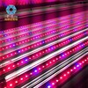 2016 new arrival straight red & blue t8 plant grow led light