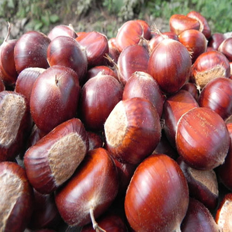 2017 Best Quality New Organic Chestnut Price Per Kg