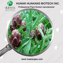 Organic Ingredient Artichoke Extract Powder for Liver Protection, Cholesterol and Dietary Supplement