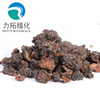 factory supply top quality Myrrh extract powder with 10:1