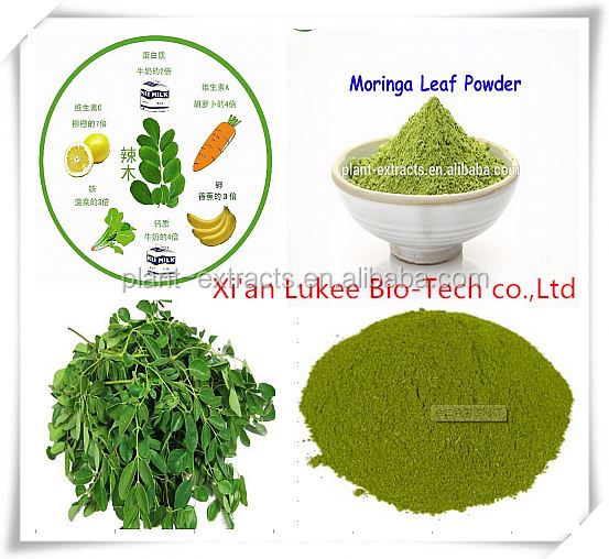 moringa leaf extract:drumstick tree