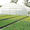 Greenhouse film UV protection Greenhouse plastic film
