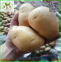Fresh Potato /holland Potato:Export to Singapore, Malaysia, such as the UK