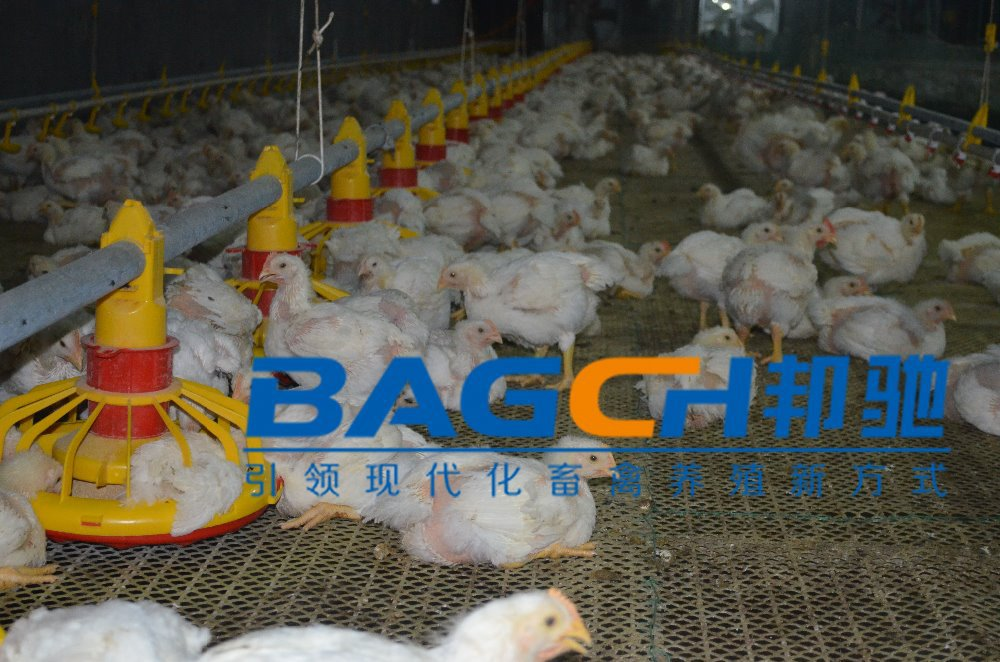Automatic Broiler Pan Feeding System For Chicken Poultry House/poultry feed production line