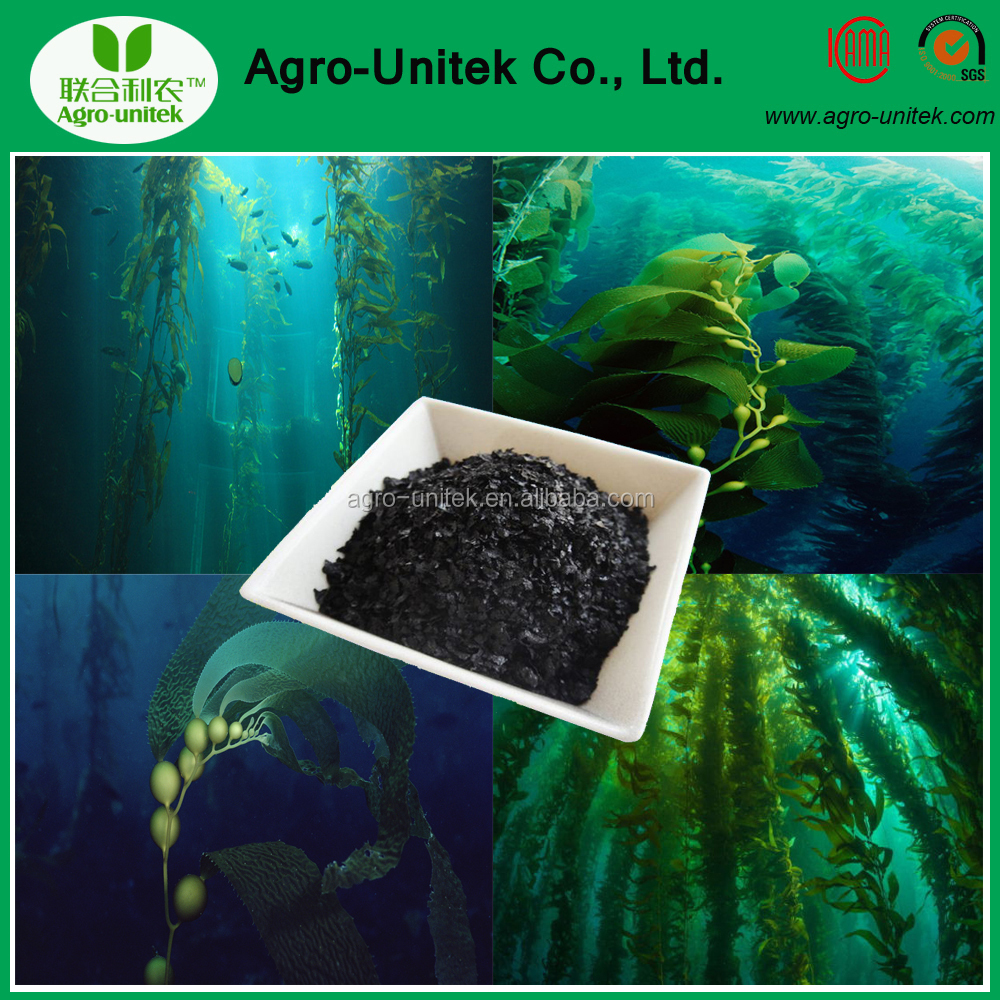 Hot Sell Water Soluble Seaweed Organic Fertilizer