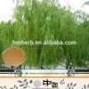 Professional/manufacture/supply white willow extract /saligenin