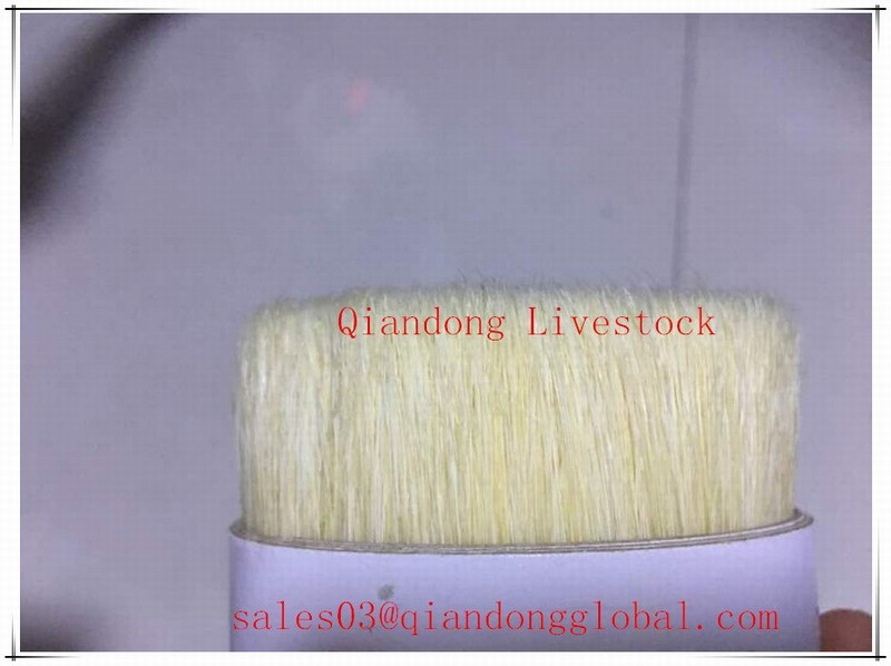 60% Tops 51mm ChungKing Pure White Boiled Bristle Pig Hair