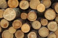 Eucalyptus wood round Logs