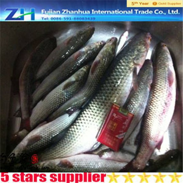 2015 new arrive Fresh and frozen mullet fish roe seafood