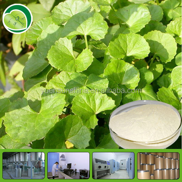 organic herb Pennywort Herb Extract powder Gotu Kola Extract