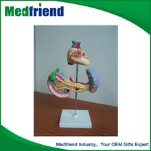 MFM0149 Heart and Pancreas Model Factory Pricce