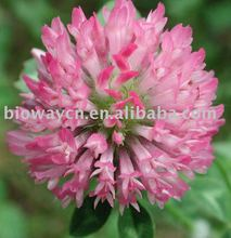 Red Clover P.E.-Total Isoflavones 2.5%-20%